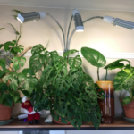 indoor plants light